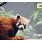 Poster for Arunachal Pradesh Forest Department's Bomdila Interpretation Centre