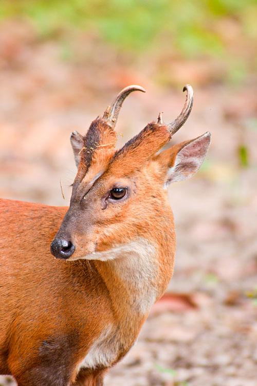 deer grove hindu personals Like the devadasis of hindu temples hangings for the sacred grove groves became the deer-gardens (german tiergarten.
